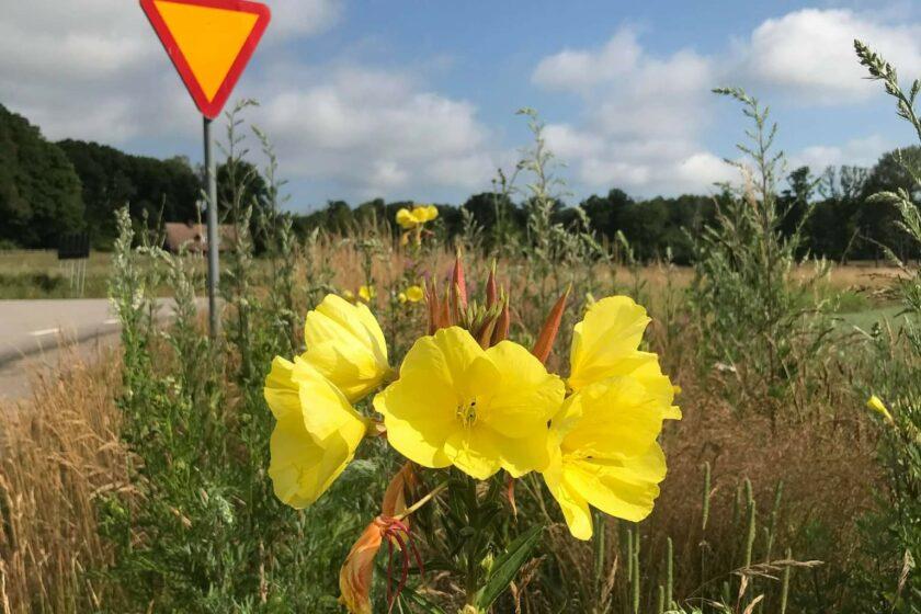 Blommor vid vägkant